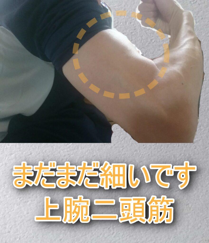 上腕二頭筋のimage